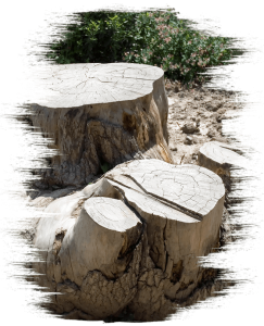 stump grinding in Koongamia