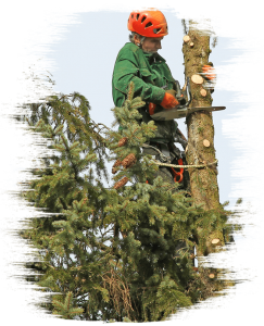 Arborist Lennard Brook